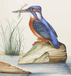 Ornithologie d'Europe par...