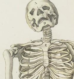 4 dessins anatomiques.