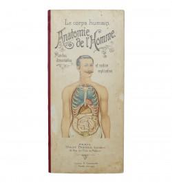 Le corps humain. Anatomie...